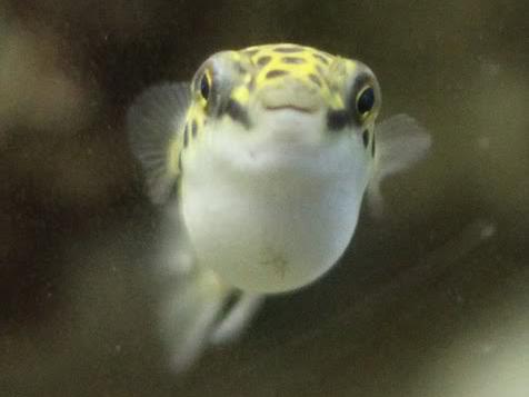 Kogelvissoorten brakwater