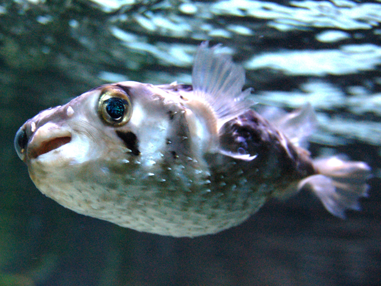 Aanverwante zeewatersoorten